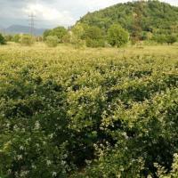 Fructe de mur proaspete-producator  Poza