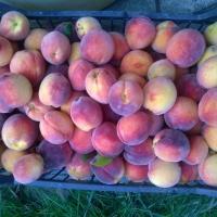 Fructe ecologice Poza