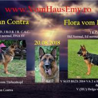 Prenotari catei de ciobanesc german cu pedigree canisa vom Haus Emy Poza