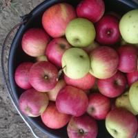vand mere bio cantitate industriala oferta Fructe