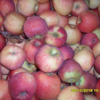 Vând mere, oferta Fructe