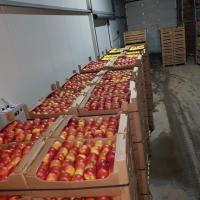Vand mere consum (EN GROS) & mere pentru programul