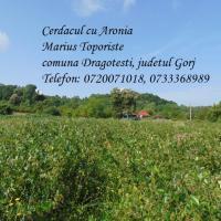 Vand fructe aronia bio incepand cu 15 august 2019 - Tel 0720071018, 0733368989 Poza