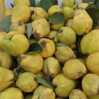 Vand gutui, 4 lei/kg oferta Fructe