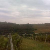 Arenda 8.5 hectare teren dintre care 3 cu vita de vie in satul Uricani Iasi oferta Vita de vie