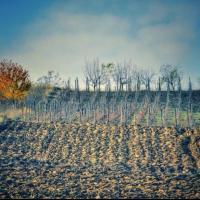 Arenda 8.5 hectare teren dintre care 3 cu vita de vie in satul Uricani Iasi Poza