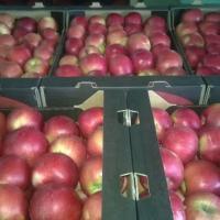 Mere de vanzare din soiurile Florina si Idared, pret 1,20 lei per kg Poza