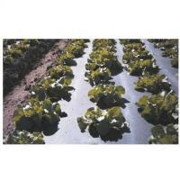 Folie mulcire biodegradabila oferta Diverse
