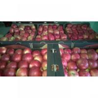Vand mere din soiurile Jonathan, Florina, Mutzu si Starkinson oferta Fructe